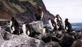 penguinstristan.jpg
